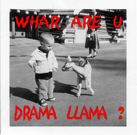 Whare_are_u_drama_llama_res