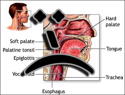 Throat_3