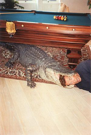Arnold_alligator_ii