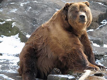 Mean_bear